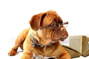 Capacitacion de un veterinario