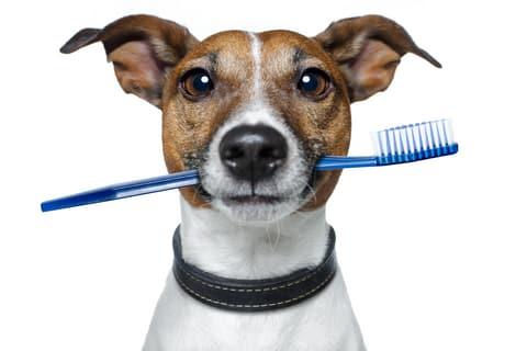 cepillar dientes de perro