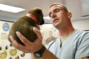 especialidad de un veterinario