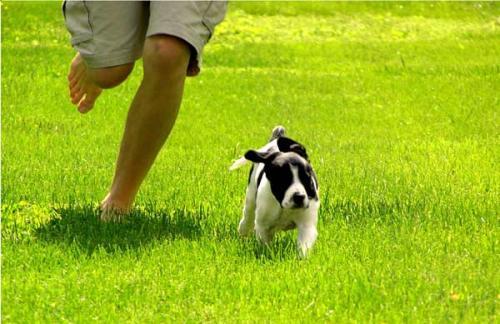 perro_haciendo_ejercicio
