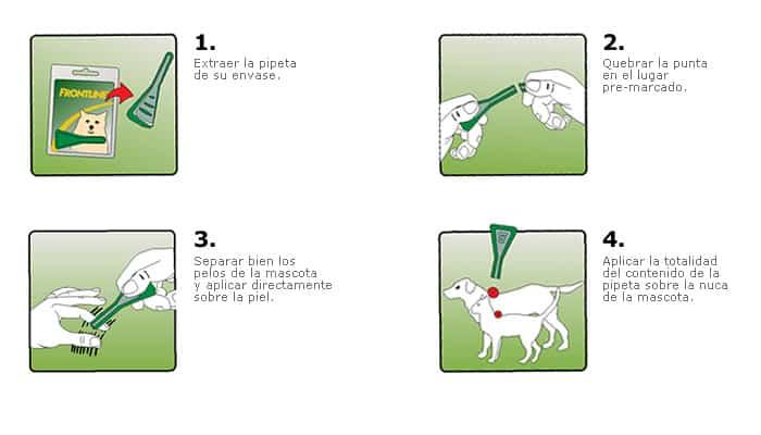 Aplica un tramiento de pulgas para tu perro