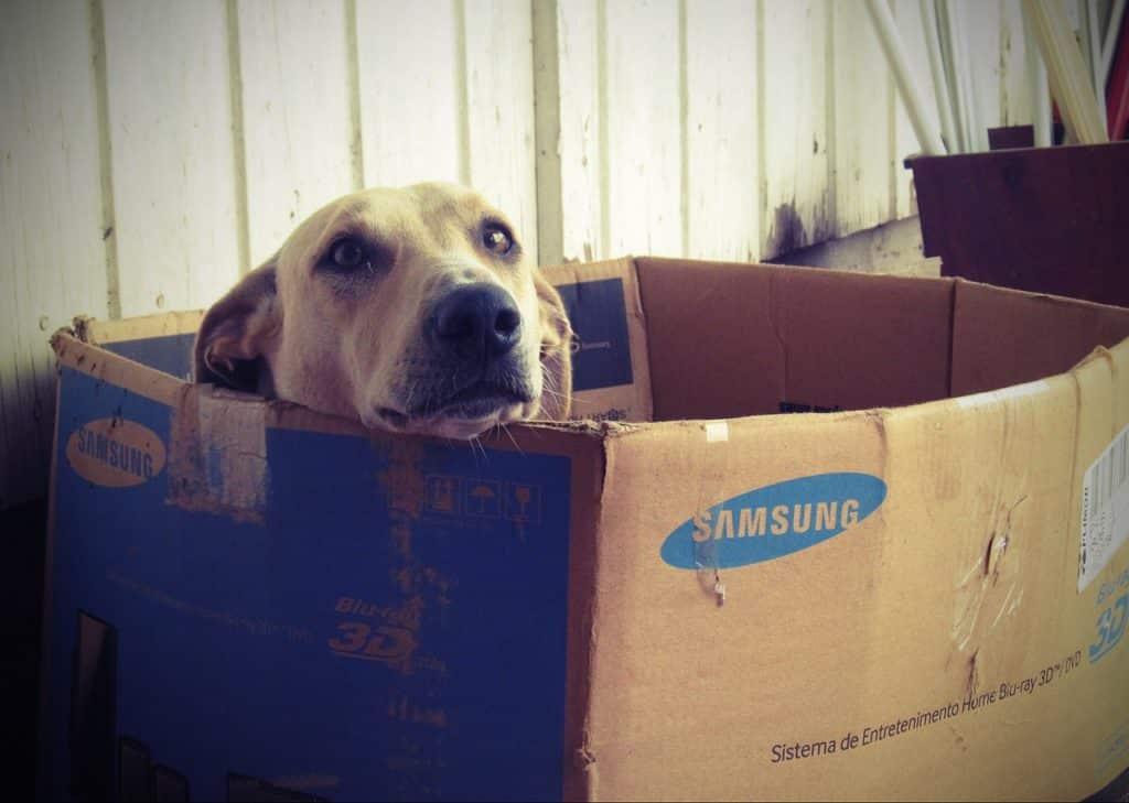 casa para perro: la mejor opcion para tu mascota