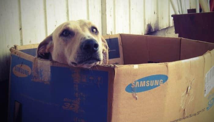 Casa para perros: busca la mejor opción para tu mascota
