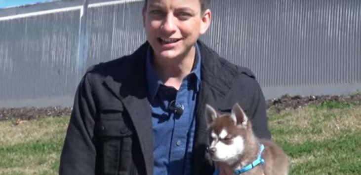 Blogs de Adiestramiento Canino