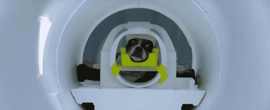 Escaneo de Perros