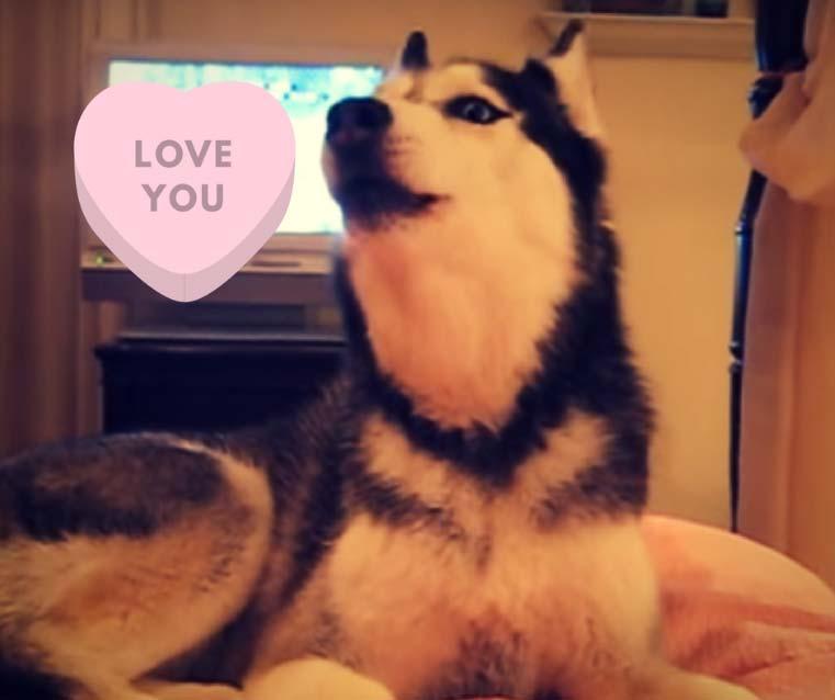 Test para Saber si mi Perro me Quiere