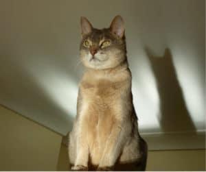 Origen Razas de Gato