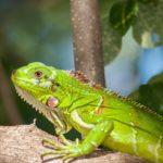 Ideas Para Construir Un Extraordinario Terrario Para Tu Iguana