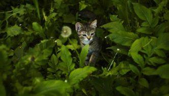 ¿Qué es el Catnip? Y por qué tu Gato es Tan Feliz Con esta Planta