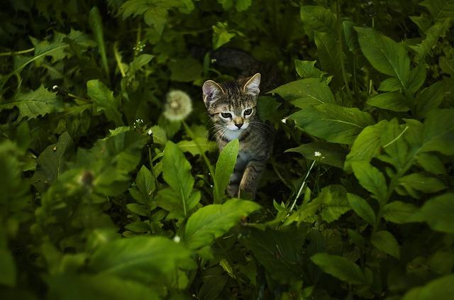 que es el catnip