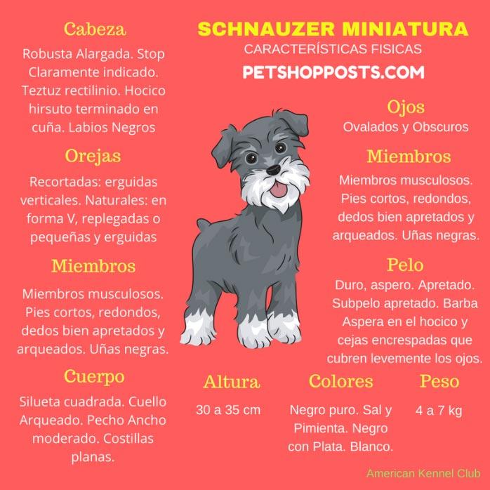 Caracteristicas fisicas del Schnauzer Miniatura