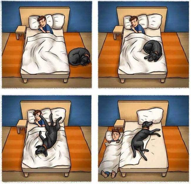 Lo malo de dormir con tu perro