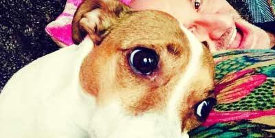 Los perros ayudan a combatir la depresion