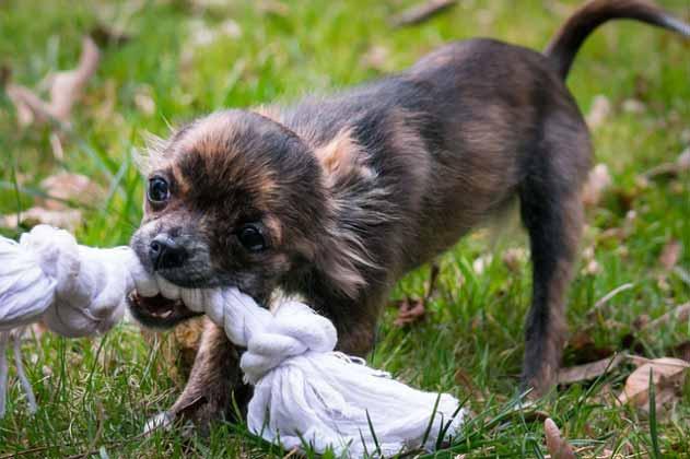 Como educar a un cachorro a no morder