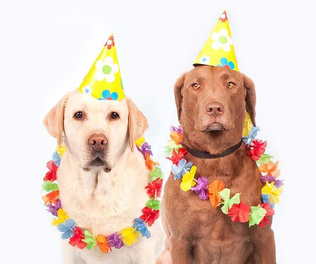 21 Datos que No Conocías de Tu Perro Labrador Retriever y Debes Saber 47384c39f96