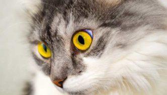 Nombres para Gatos (Geniales para Macho y Hembra)