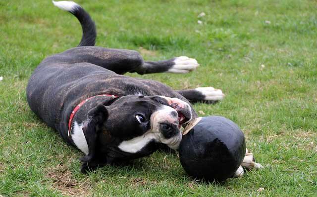 Nombres para perros Boxer Hembra