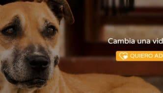 Adoptare®, el Sitio que Busca Redefinir la Adopción de Mascotas en México