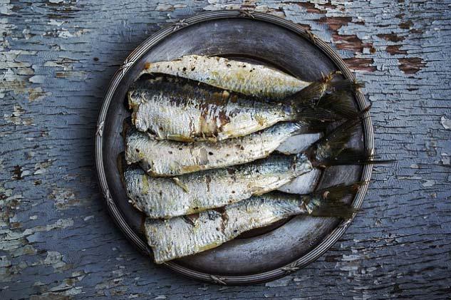 Los perros pueden comer sardinas