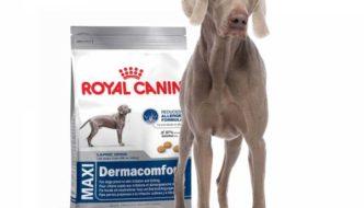 La Verdad sobre las Croquetas Royal Canin (Review)