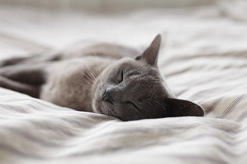 Nombres gatos hembras grises