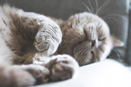 Nombres para machos gatos grises
