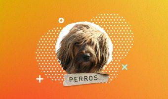11 Razas de Perros Peludos -Pet Posts