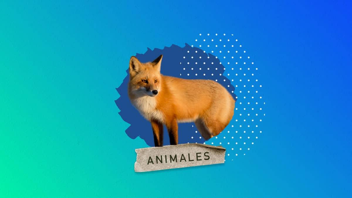 Animales que viven en el bosque