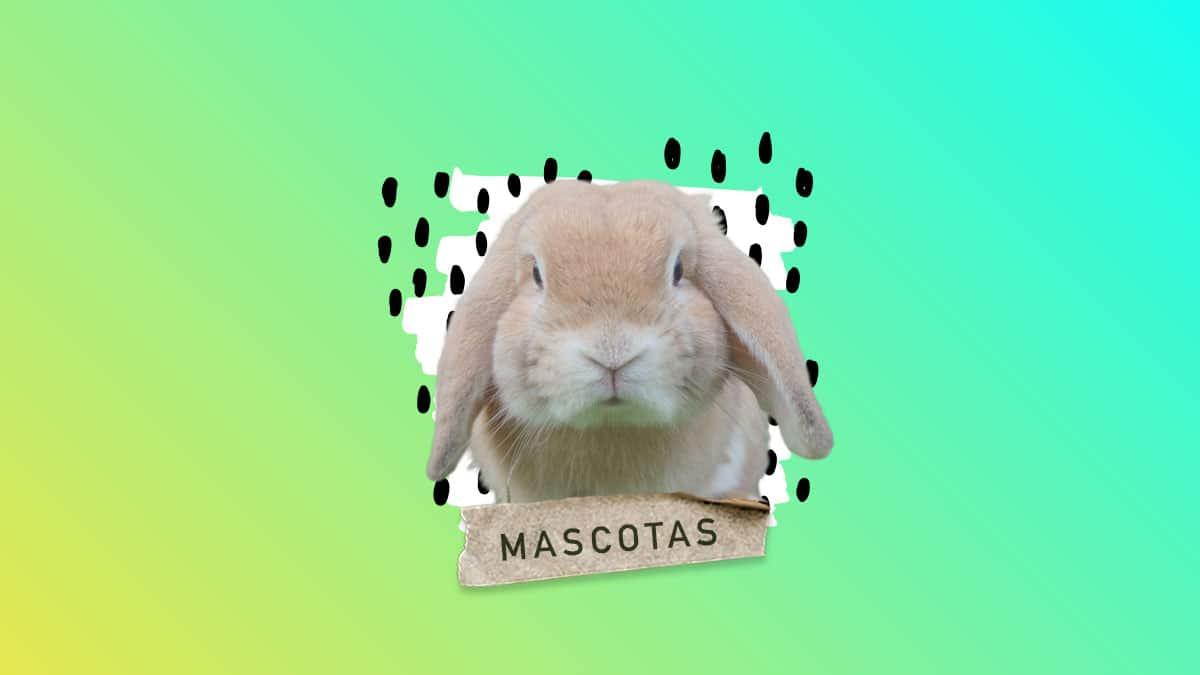Como saber si un Conejo es Macho o Hembra