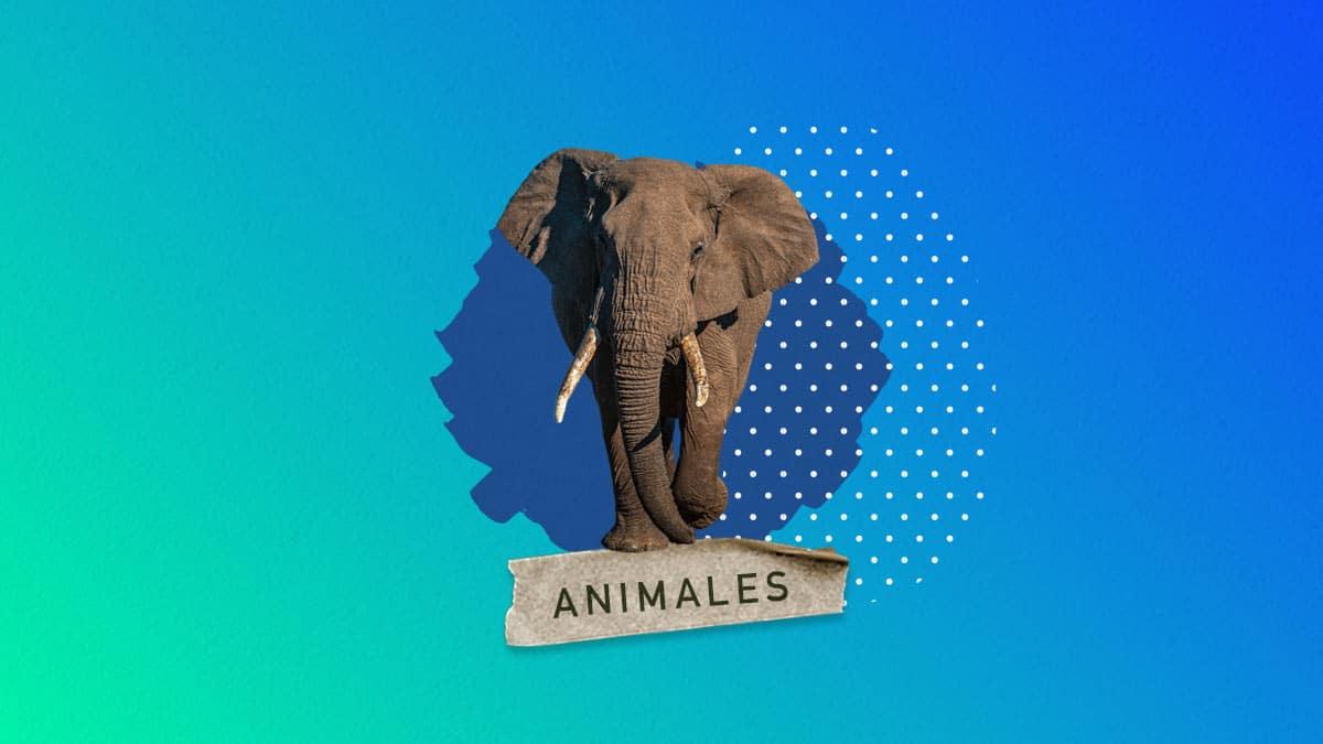 Cuanto pesa un elefante