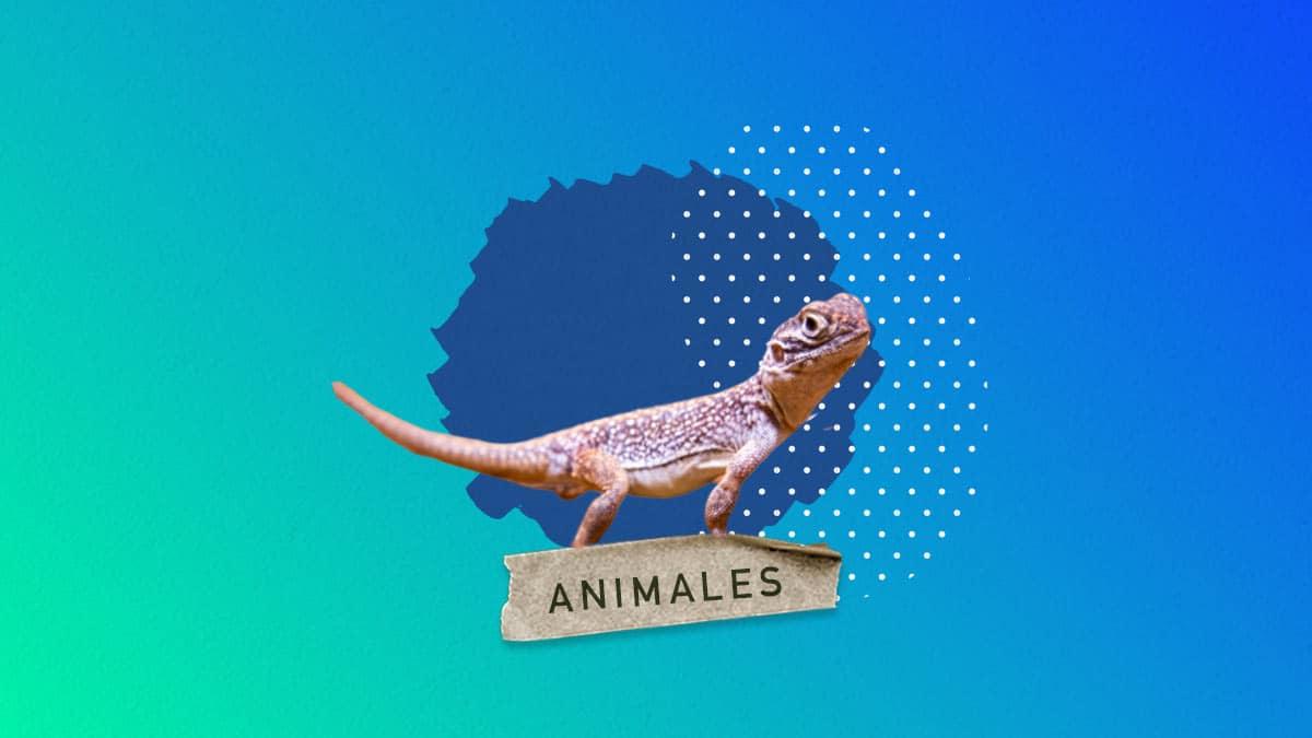 Curiosidades sobre las lagartijas