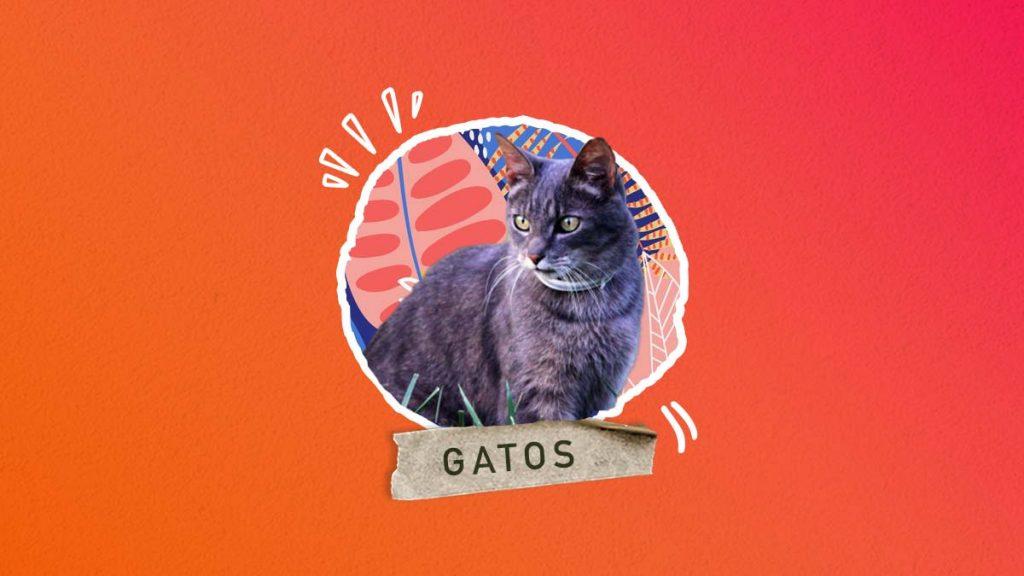 Nombres para gatos grises