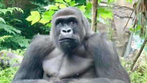 45 Animales Omnivoros- Ejemplos