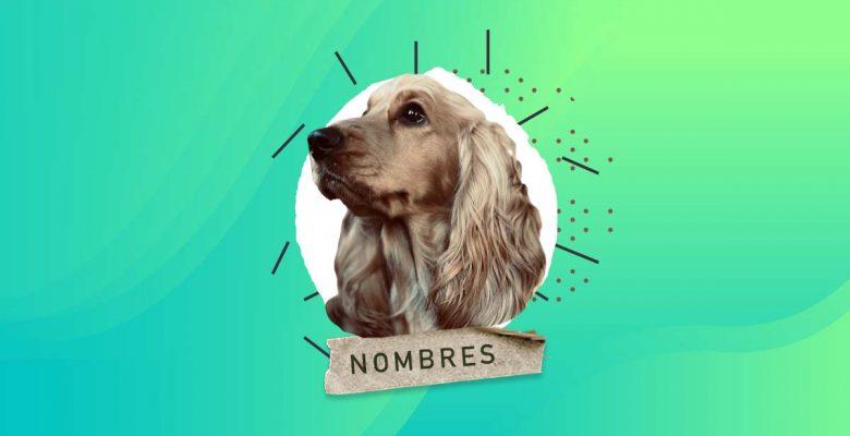 Nombres para perros cocker