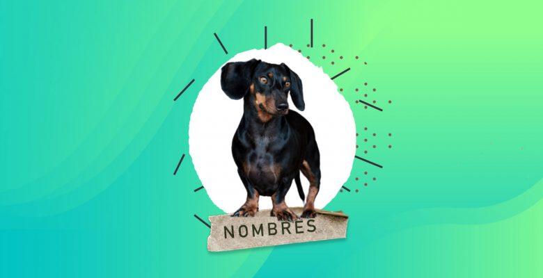 110 Nombres para Perros Salchichas